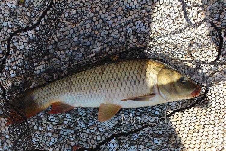 Рыбалка на Скадарском Озере (1)