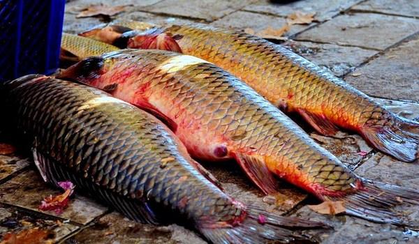 Рыбалка в Черногории (3)